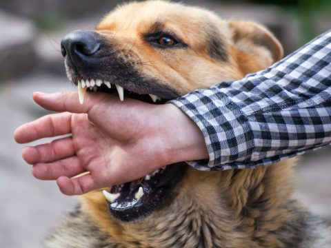 Can you sue for a dog bite? How much compensation can you get out of a dog bite lawsuit? Click here to learn everything you need to know.